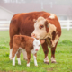 Animal Nutrition Proteins